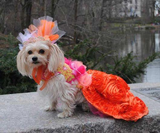 vestido para cachorro com flores