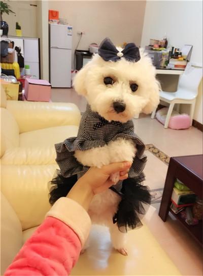 lindos modelos de vestido para cachorro