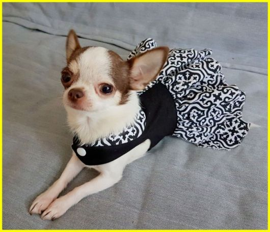 vestido para cachorro preto estampa minimalista
