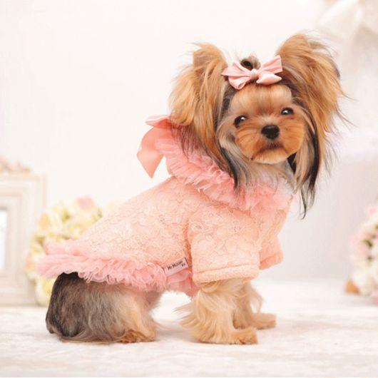 vestido para cachorro da moda inverno