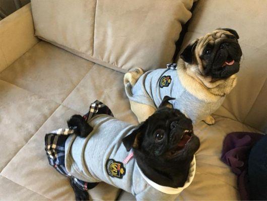 vestido para cachorro peças para o inverno