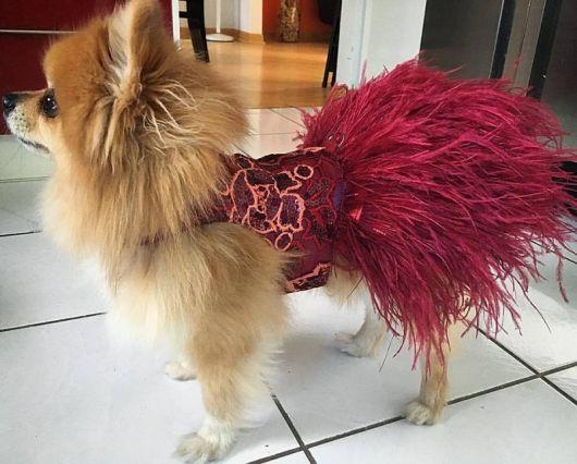 vestido para cachorro para festa chique