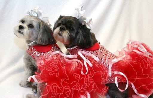 vestido para cachorro vermelho para festa