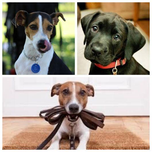 60 modelos de coleira para cachorro + dicas para escolher a melhor para seu cãozinho!