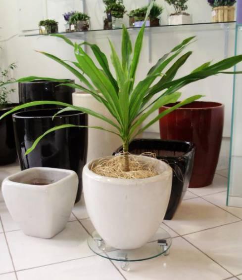 Modelo de vaso vietnamita branco clássico