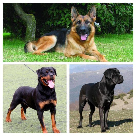 É preciso saber que um cão de guarda não é necessariamente um cão de ataque