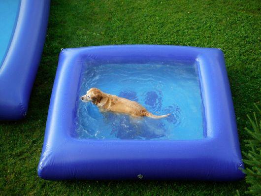 fotos de piscina para cachorro