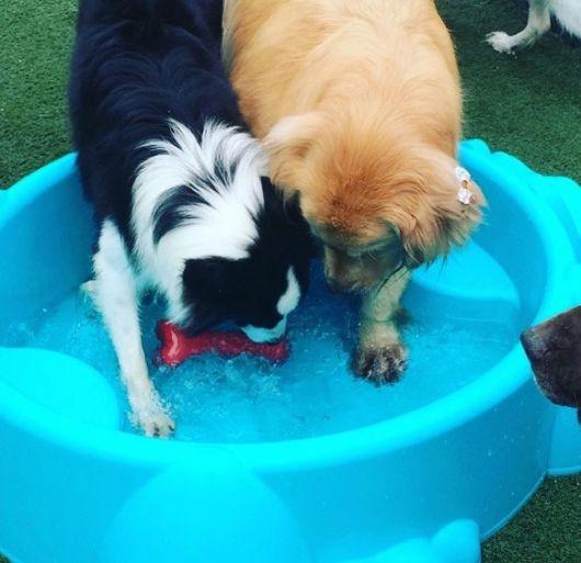piscina para cachorro simples