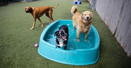 dicas de piscina para cachorro