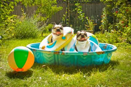 modelos de piscina para cachorro