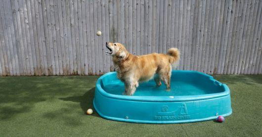 lojas para comprar piscina para cachorro