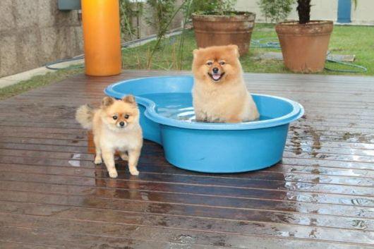 piscina para cachorro para cachorro pequeno