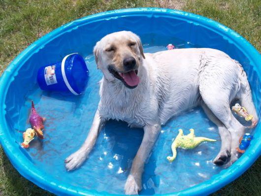 cuidados com piscina para cachorro
