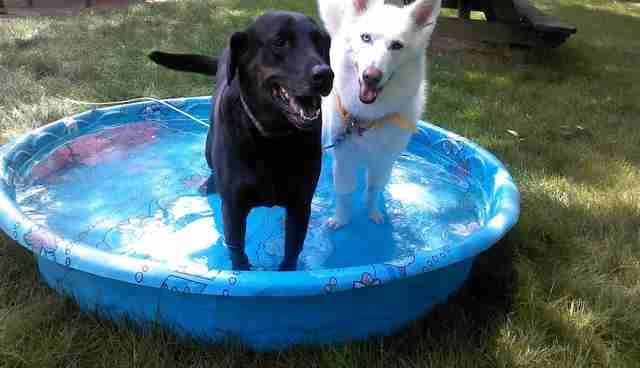 comprando piscina para cachorro