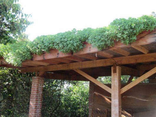 telhado com folhagens