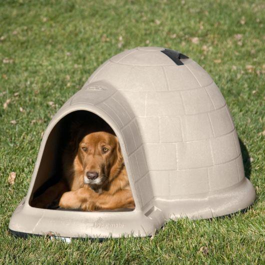 Essa casinha de cachorro grande em formato de iglu é linda e original