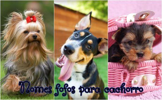 Conheça dicas de nomes fotos para cachorros!