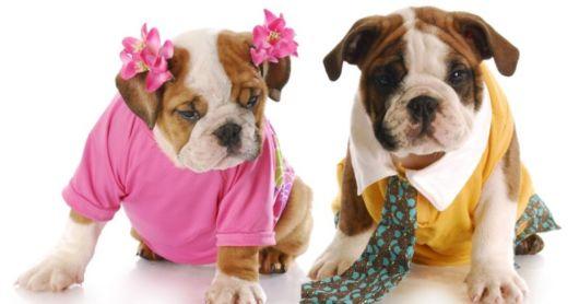 Há milhares de nomes fofos para cães machos e fêmeas!