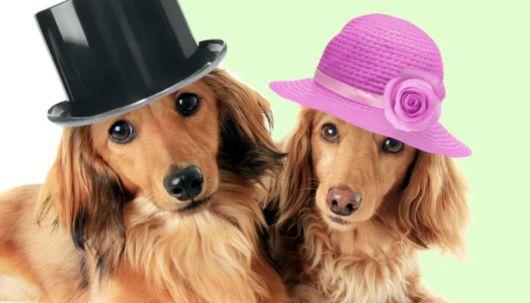 Anote os nomes fofos de cachorros preferidos!