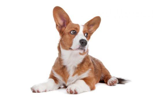Tem um cãozinho macho? Escolha um nome perfeito pra ele
