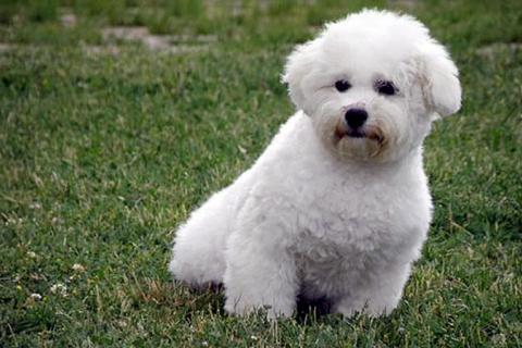 Você pode combinar um nome curto com o cão pequeno