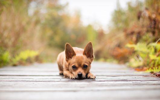 Esses nomes fofos são ideais para cães de pequeno porte