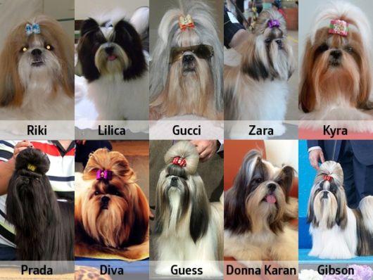 Nomes fofos para cachorros inspirados em marcas famosas