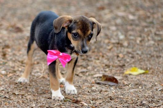 Conheça as nossas dicas de nomes fofos para cadelas