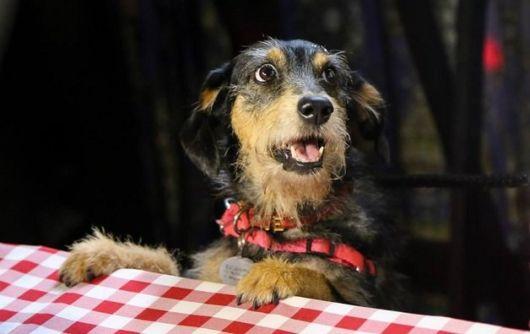Resgatou um cão da rua? Dê um nome a ele!