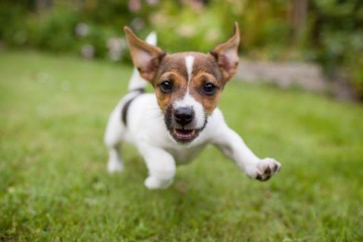 Agora é a vez de conhecer nomes fofos para cachorros machos!