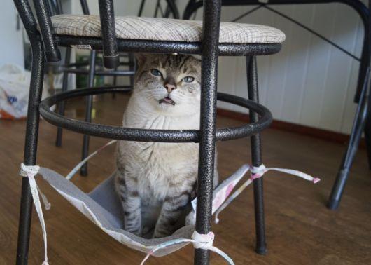 rede para gatos para cadeiras