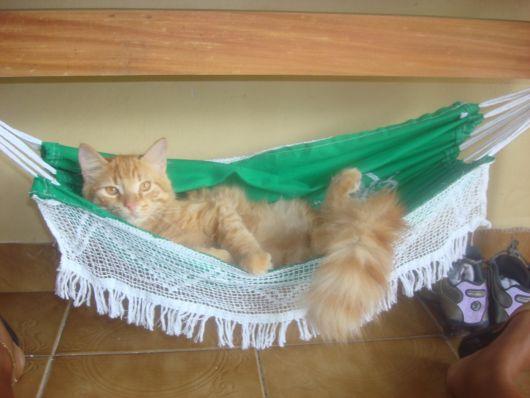 rede para gatos verde com branco