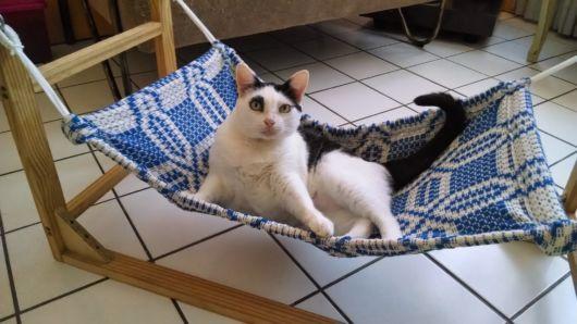 rede para gatos azul com suporte