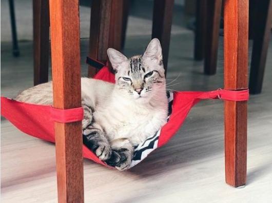 rede para gatos vermelha para cadeiras
