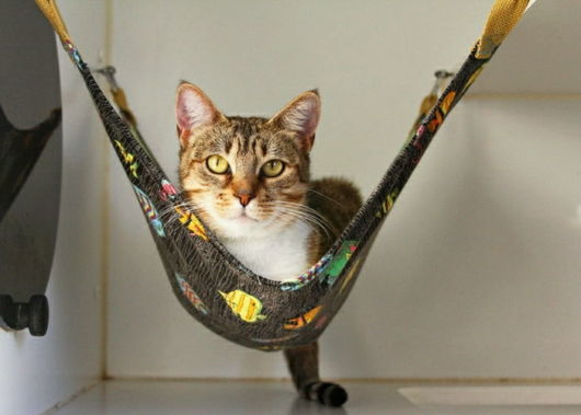 rede para gatos preta de renda