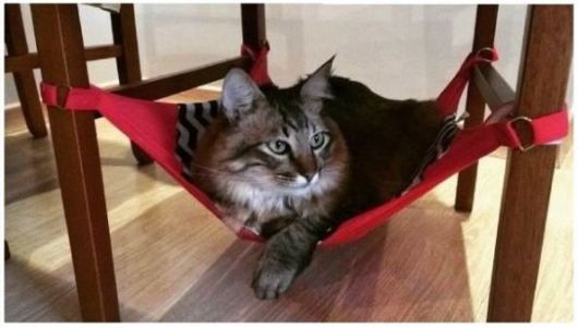 rede para gatos para cadeiras de madeira