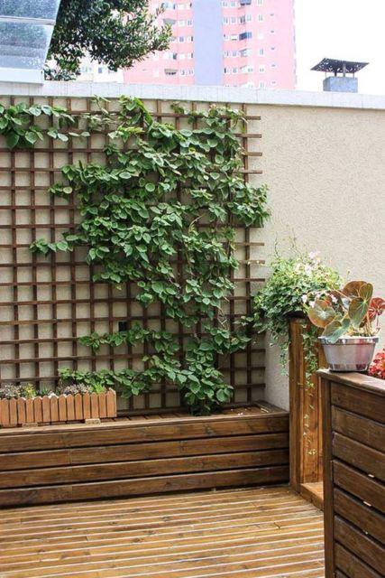muro com planta trepadeira