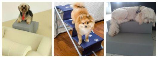 Montagem com fotos de três animais em escadas.