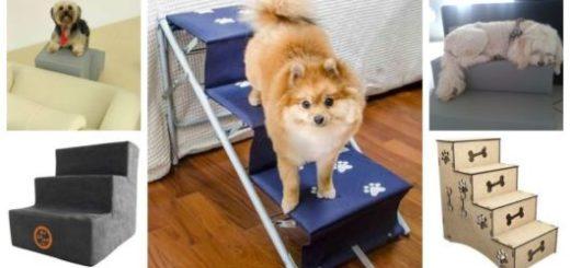 Montagem com cinco exemplos de escada para cachorro.