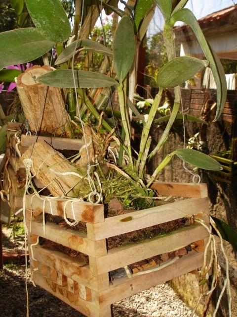 Cachepot rústico ideal para o jardim