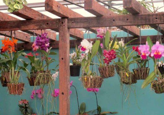 Você pode até pendurar o cachepot de madeira com orquídeas em um pergolado