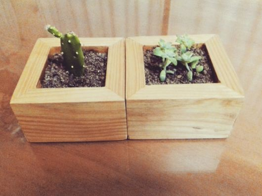 Lindos cachepots pequenos e quadrados para cultivar suculentas e cactos
