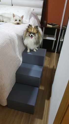 Cachorro em escada.