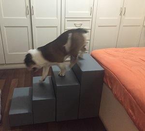 Cachorro descendo escada.