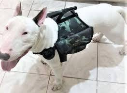 mochila para cachorro camuflada