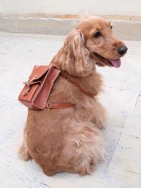 mochila para cachorro marrom de couro