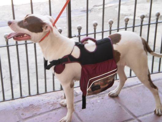 mochila para cachorro com bolsos laterais