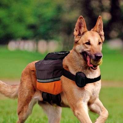 modelos de mochila para cachorro