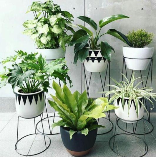 Você pode criar um espaço com diversos com suas plantas prediletas