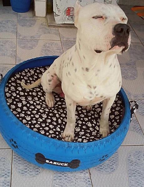 Sem dúvidas, o cão vai adorar ter uma caminha linda e confortável só para ele